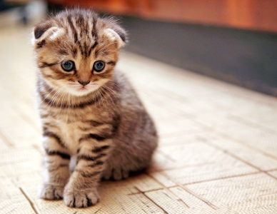 A Scaredy-Cat, Small Cute Kitten