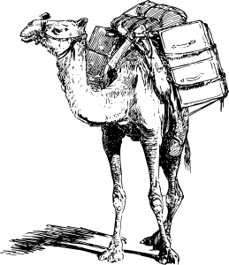 The camel's back, carrying things